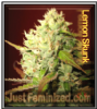 Lemon Skunk Feminized Mix & Match Seeds